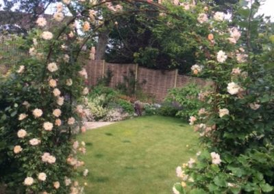 Rose arch matured